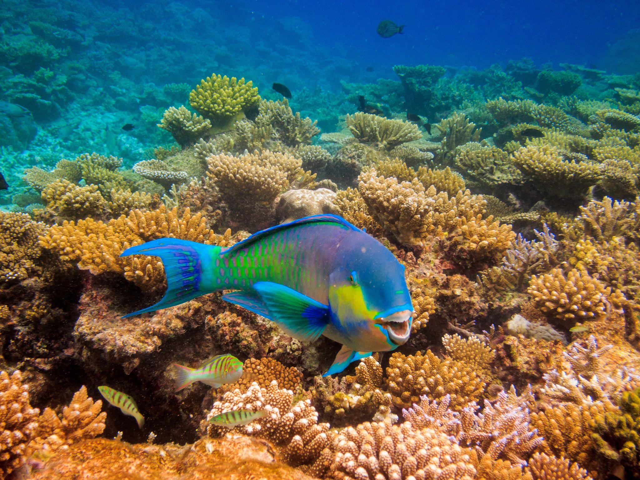 دریای  مالدیو