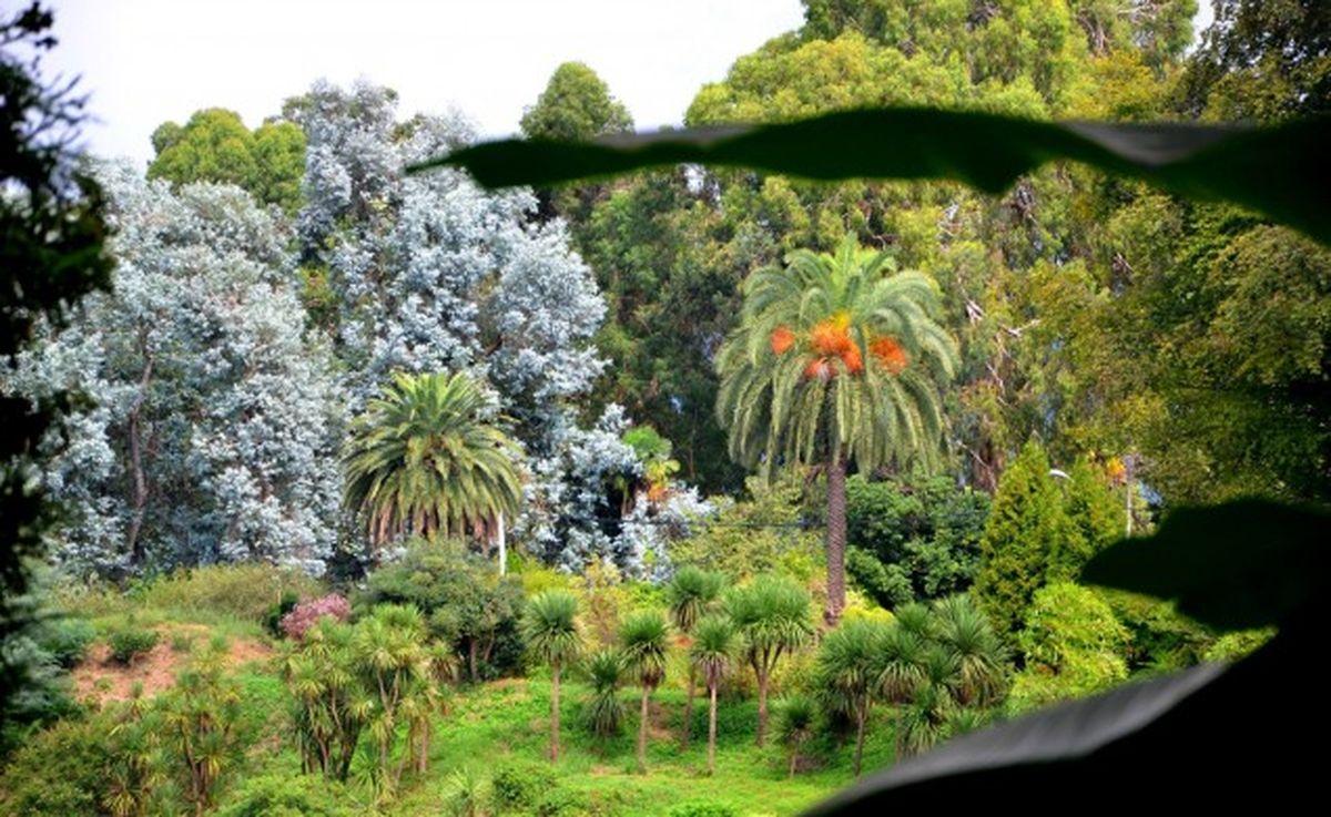 باغ گیاه شناسی در باتومی