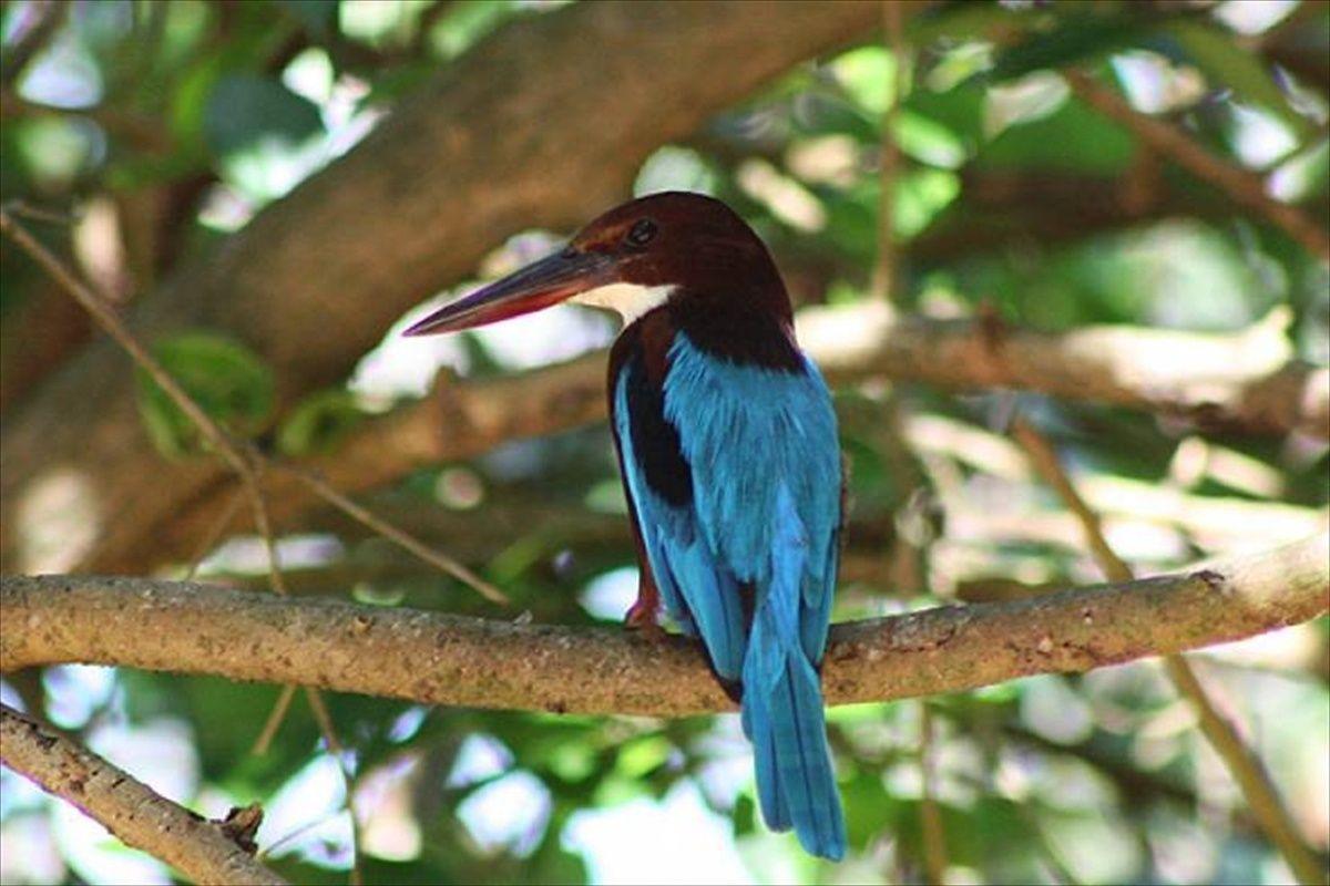 تنوع گیاهی و حیوانی در سریلانکا
