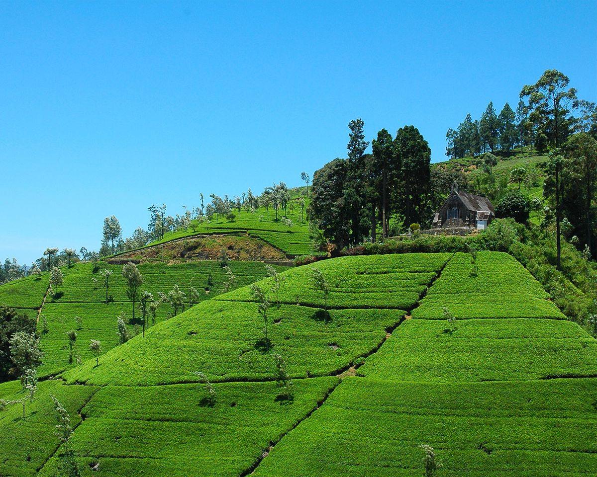 طبیعت شهر دمبولا در سریلانکا