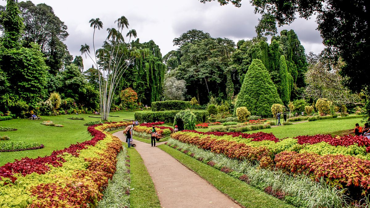 باغ گیاه شناسی پرادنیا در کندی سریلانکا