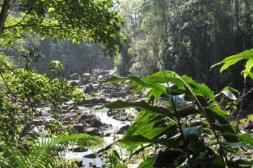 جنگلهای سینهاراجا در سریلانکا