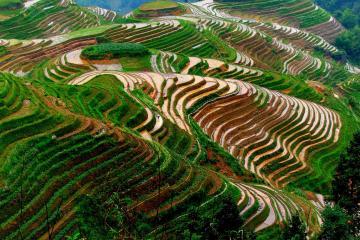 مزارع برنج Longsheng در گوئیلین - چین