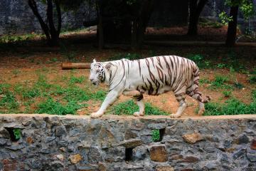 باغوحش آریگنار آنا در چنای - هند