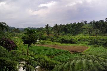 شهر بوگور در نزدیکی جاکارتا - اندونزی